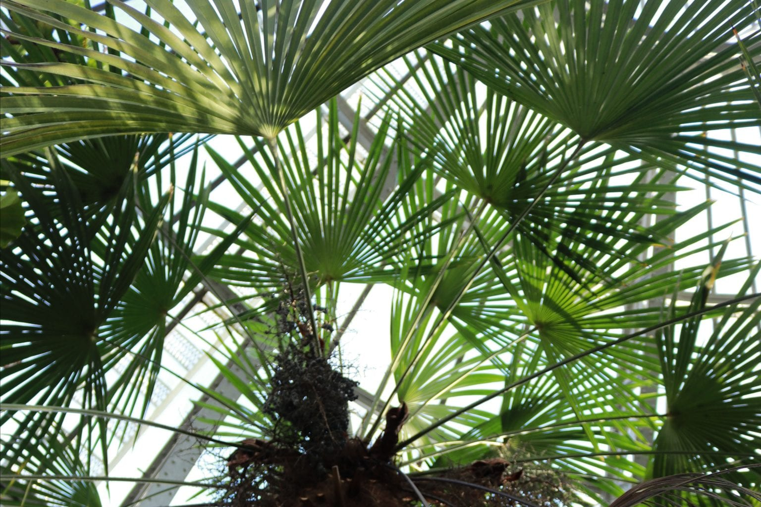 Hortus-plant-collection-3