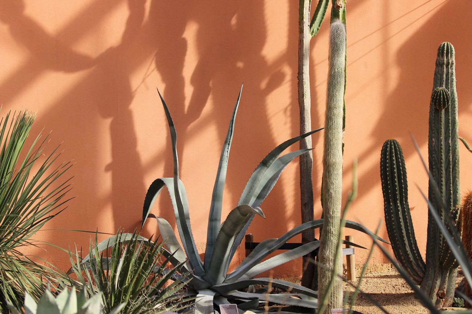 Hortus-plant-collection-4